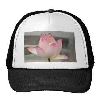 Lotus rosado gorro
