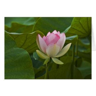 Lotus rosado tarjeta de felicitación