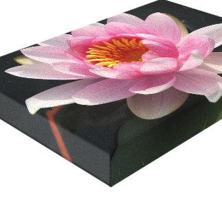 Lotus sagrado… Waterlily Impresion De Lienzo