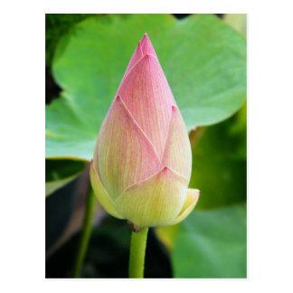Lotus Solitude Postcard