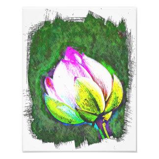 Lotus starting to bloom photo art