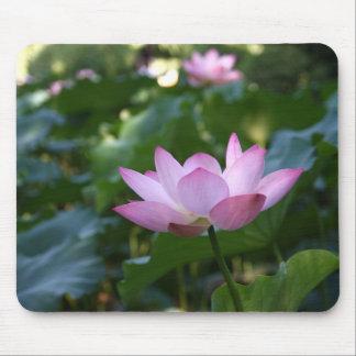 Lotus Tapete De Raton