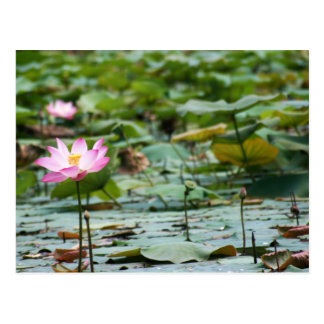 Lotus Tarjeta Postal