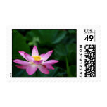 Lotus Tranquillity Postage Stamps