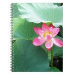 Lotus tranquilo libros de apuntes
