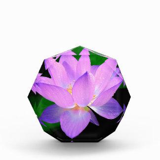lotus water romantic date bridal peace hope love acrylic award