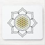 Lotus White2