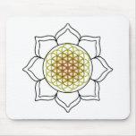 Lotus White4