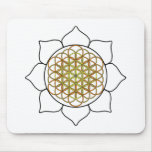Lotus White5