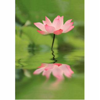 Lotus Zen Cutout