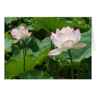 Lotuses Card