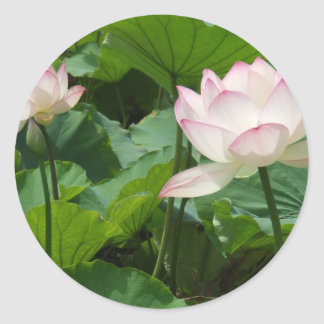 Lotuses Classic Round Sticker