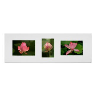 Lotuses in three poster