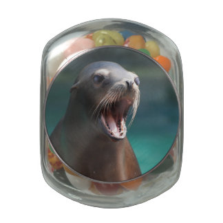 Loud Sea Lion Jelly Belly Candy Jar