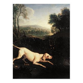 Louis XIV's Dog, Tane Postcard