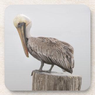 Louisiana Brown Pelican Coasters