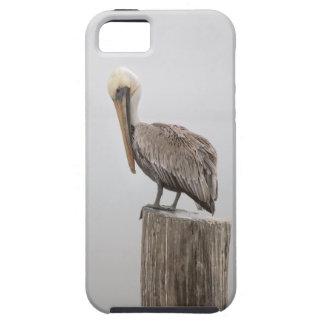 Louisiana Brown Pelican iPhone SE/5/5s Case