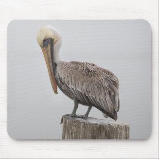 Louisiana Brown Pelican Mouse Pad