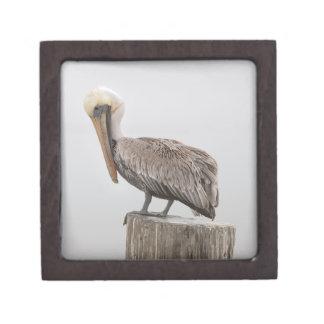 Louisiana Brown Pelican Premium Gift Box
