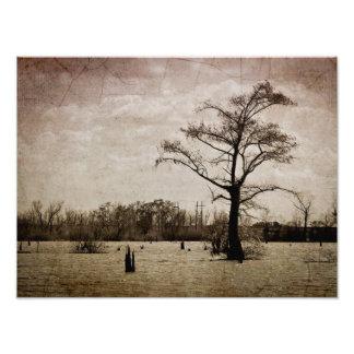 Louisiana Cajun Landscape Photo Print