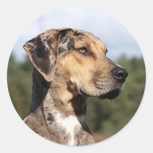 louisiana catahoula leopard dog classic round sticker