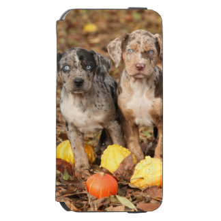 Louisiana Catahoula Puppies With Pumpkins iPhone 6/6s Wallet Case