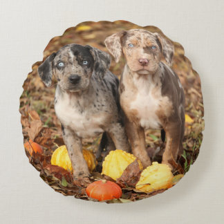 Louisiana Catahoula Puppies With Pumpkins Round Pillow