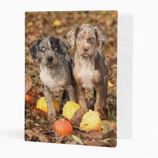 Louisiana Catahoula Puppies With Pumpkins Mini Binder