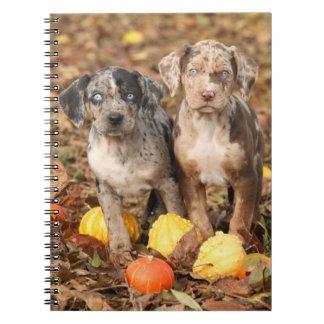 Louisiana Catahoula Puppies With Pumpkins Notebook