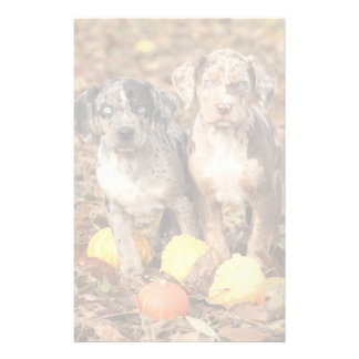 Louisiana Catahoula Puppies With Pumpkins Stationery