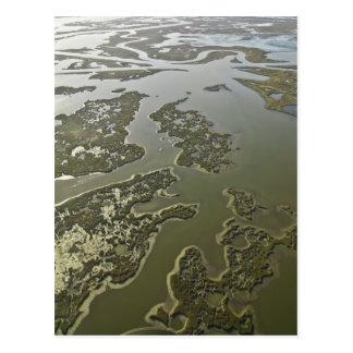 Louisiana Coastal Wetlands Postcard