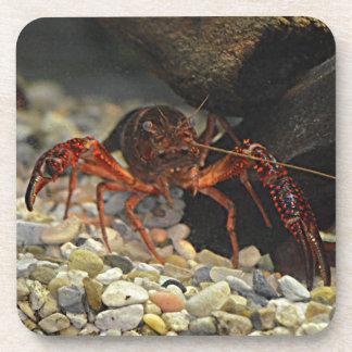 Louisiana Crawfish Coaster