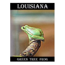 Louisiana Green Tree Frog Postcard