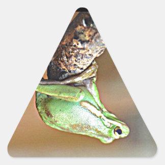 Louisiana Green Tree Frog Triangle Sticker