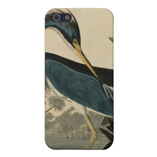 Louisiana Heron iPhone SE/5/5s Cover