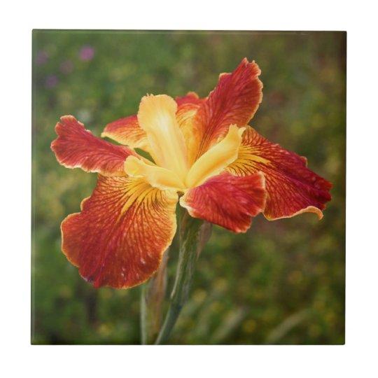 """Louisiana Iris """"Cajun Sunrise"""" Ceramic Tile"""