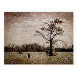 Louisiana Landscape Post Card