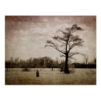 Louisiana Landscape Postcard