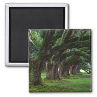 LOUISIANA LIVE OAK TREES MAGNET