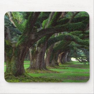 LOUISIANA LIVE OAK TREES MOUSE PAD