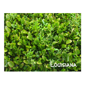 Louisiana Marshland Postcard