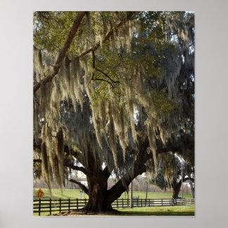 Louisiana Oak [Art Print]