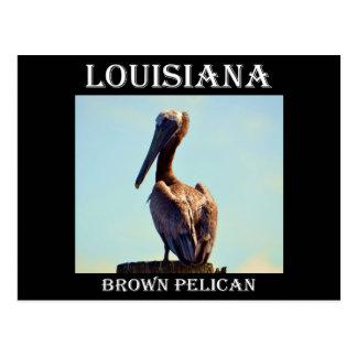 Louisiana Pelican Postcard