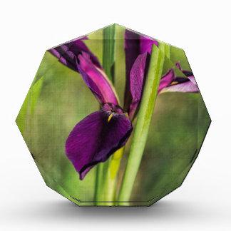 Louisiana Purple Gamecock Iris Acrylic Award