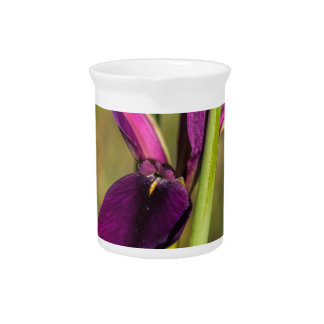 Louisiana Purple Gamecock Iris Beverage Pitcher