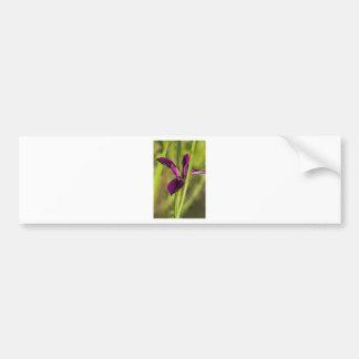Louisiana Purple Gamecock Iris Bumper Sticker