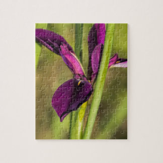 Louisiana Purple Gamecock Iris Jigsaw Puzzle
