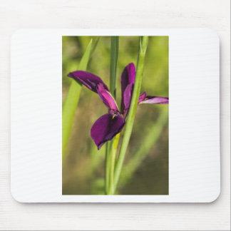 Louisiana Purple Gamecock Iris Mouse Pad