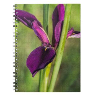 Louisiana Purple Gamecock Iris Spiral Notebook