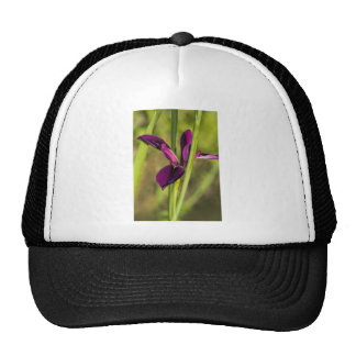 Louisiana Purple Gamecock Iris Trucker Hat